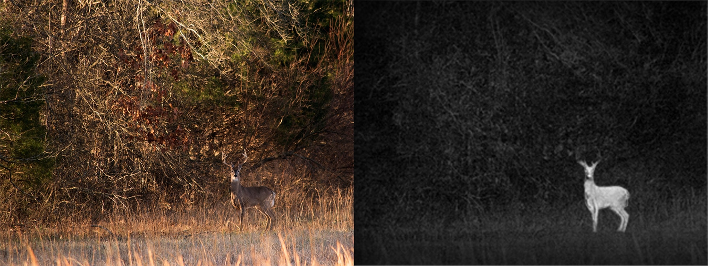 鹿サーマル画像