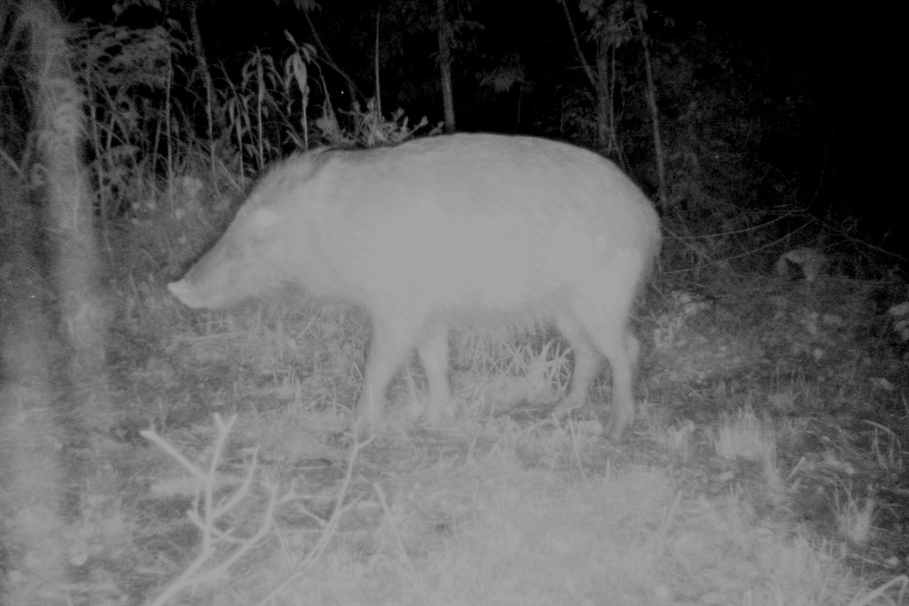 STR-MiNi-野生動物の観察